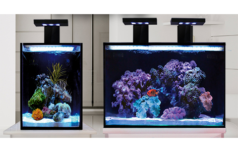 Innovative Marine Aquariums